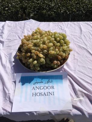 جشنواره انگور