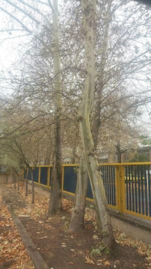 علی: سلام هوای قزوین هم بارانی و عالی
