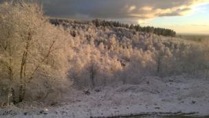 Nerwcwys forest