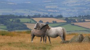 مهر وحصان