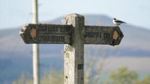 A bird on a signpost near Garn Lakes, Blaenavon, taken by Craig Titchener.