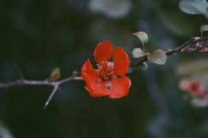 A single red flower