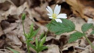 Samantha captured this image of a wood anemone at Christmas Common, too.