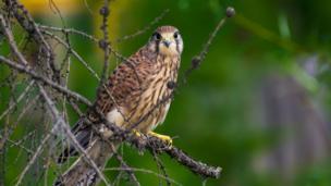 Птица в лесу