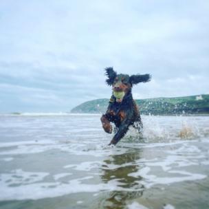 नॉर्थ डेवन के समुद्र किनारे की यह तस्वीर ली हैं सुज़ी हिल-हेम्स ने.