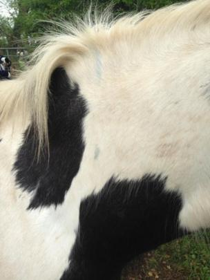 Marks on one of the horses