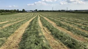 cut field in Coleraine