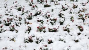 بارس برف در اردبیل