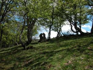 Tronco en el bosque en forma de dos personas abrazadas