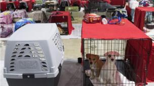 Dogs in cages, dozens are shown in evacuation centre