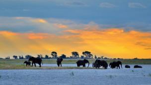 Elefantes bañándose