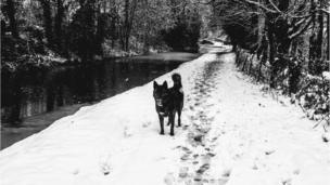 Mutley enjoying his afternoon walk alongside a canal in Llangynidr, Powys