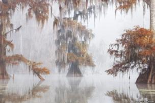 Atchafalaya Basin, Louisiana, america, International Garden Photographer of the Year