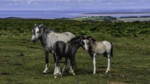 Foals on the Gower by Steve Huggett