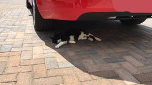Cat sleeping under a car