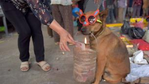 """A woman offers money to a dog """"begging"""" at a temple during the start of the Lunar New Year in Kandal, Cambodia, on February 16, 2018"""