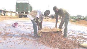 cacao, côte d'ivoire