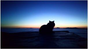 Cat looking over a sunset at Harlech