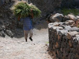 """رجل يحمل علفا للماشية في جزيرة """"سانتو أنتاو"""" بالرأس الأخضر."""