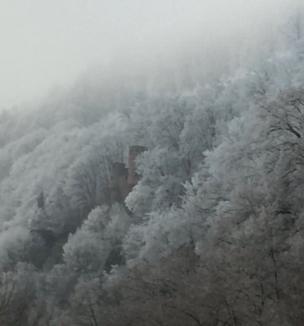 Bosque congelado