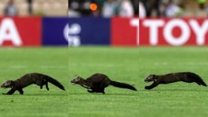 راسو در ورزشگاه آزادی