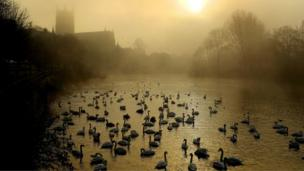 Swans on the River Severn by Worcester Cathedral
