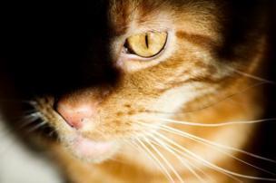 Gato en la sombra