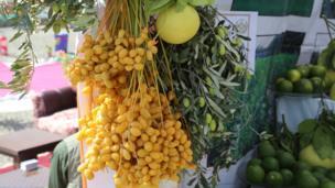 نمایشگاه کشاورزی