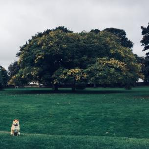 Dog in Bury Knowle Park