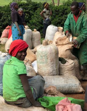 Workers fill sacks at a coffee plantation in Kenya.