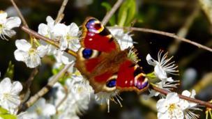 Butterfly at Penclacwydd Wetlands, Llanelli