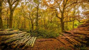 Beautiful autumn colour at Oxford University's Wytham Woods
