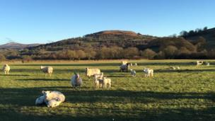 Spring is in the air at Forest Coalpit, near Abergavenny, Monmouthshire, taken by George Foster