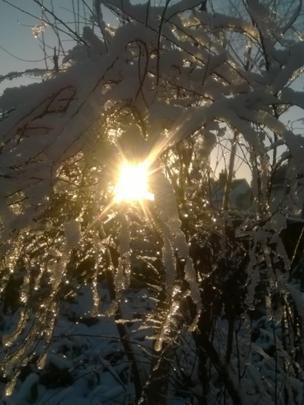 Sun shining through snow covered trees