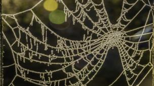 A crystalline web on a very cold frosty morning in Farmoor