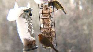 A robin and a blue tit at a bird feeder