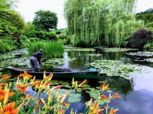 A man on a boat in a lake surrounded by plants