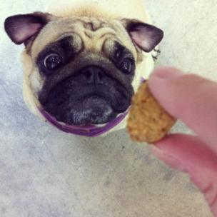 Feeding a small dog a biscuit
