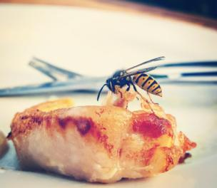 A wasp on food