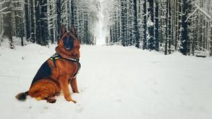 Rolf enjoying the snow in Ballybolley Forest, Larne, by Alistair White