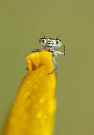 Un insecto en una planta amarilla