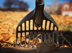 A rake in leaves