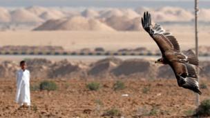 وأمام المتفرجين، جابت الطيور الجارحة السماء قبل أن تنقض على فرائسها من الحمام والأرانب.