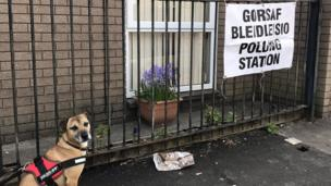 A dog outside a polling station in Splott