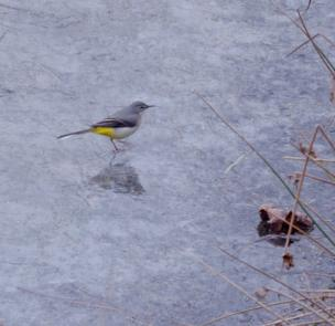 A small bird on top of some frozen ice