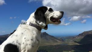 Lottie, the dog, admiring the views on a walk up Snowdon