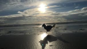 Dog running along Newgale Beach, Pembrokeshire