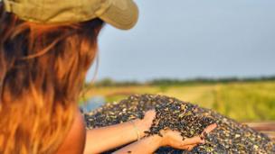 Mujer joven con las manos zambullidas en un montaña de semillas de girasol
