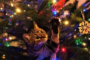 Gato junto a las decoraciones de un árbol de navidad