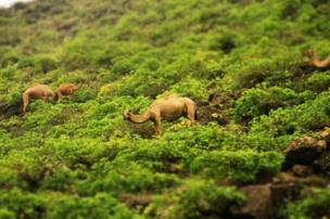 A camel in shrubbery